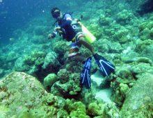Pesona Bawah Laut di Taman Laut Pulau Rubiah
