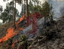 Kebakaran Hutan Toba