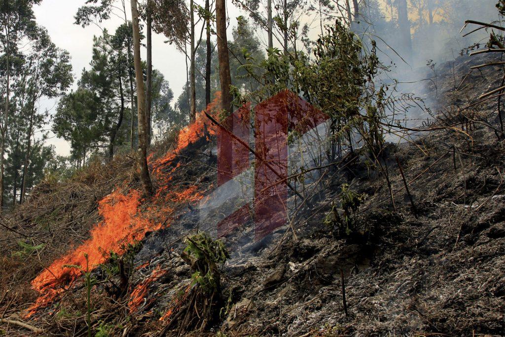 kebakaran-hutan-1