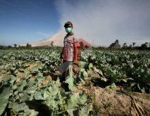 Tanah Subur di Zona Bencana